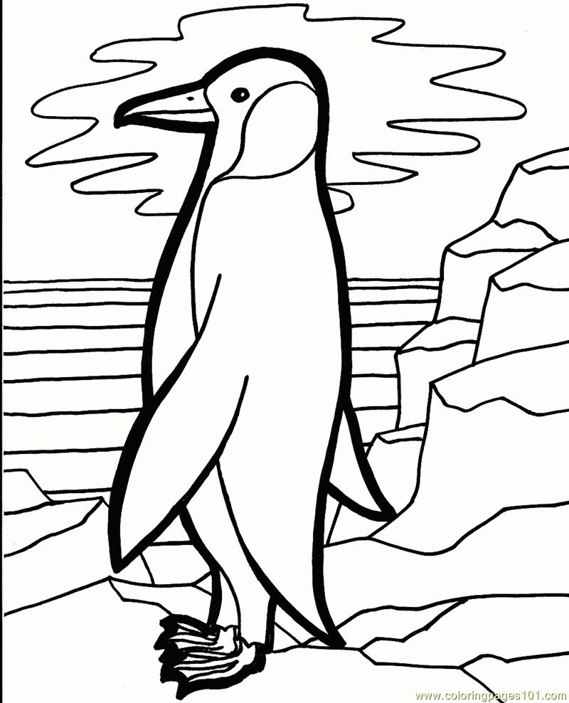 Penguin bird Coloring Page