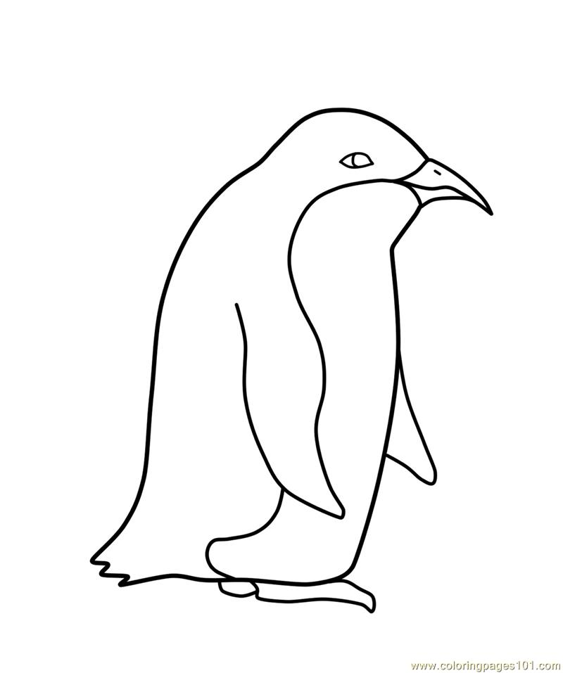 Penguin Coloring Page Free Penguin