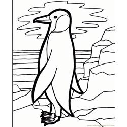 Penguin bird Free Coloring Page for Kids