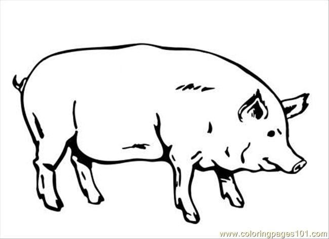 pig coloring page coloring page