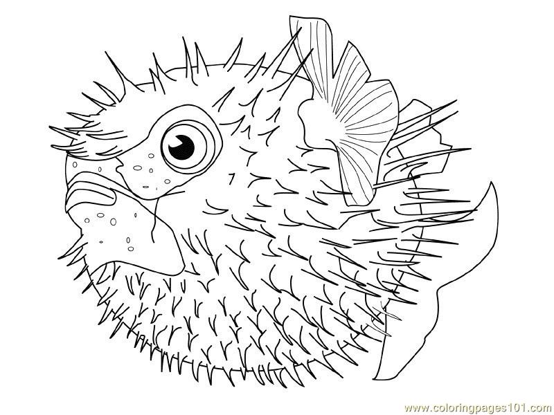 New Fishes Coloring Page