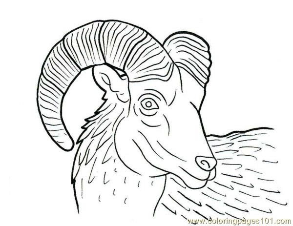 Ram horn Coloring Page Free Ram
