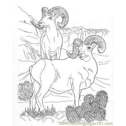 Bighorn rams coloring page