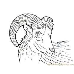 Ram horn Free Coloring Page for Kids