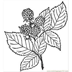 Raspberry 3 coloring page