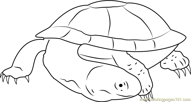 Black Spine Neck Swamp Turtle Coloring Page
