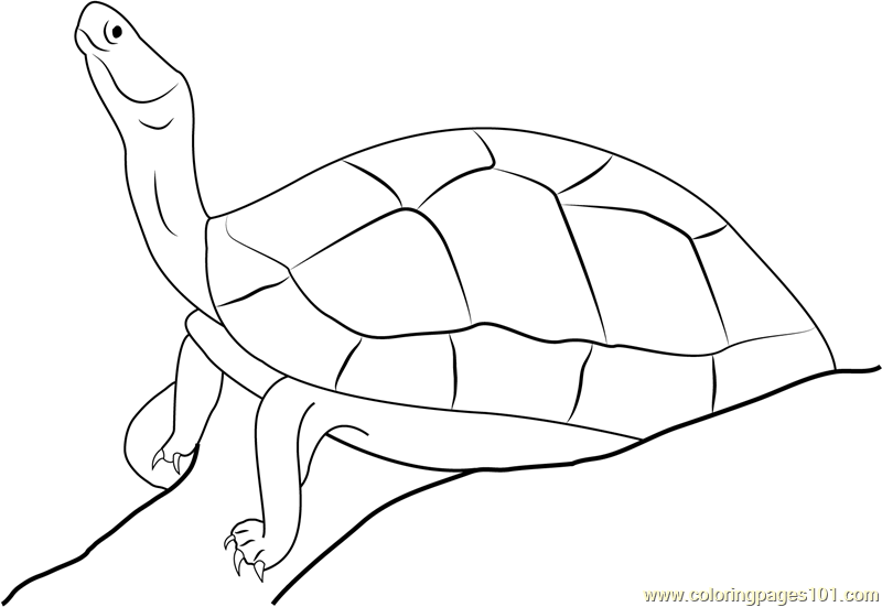 Black Turtle Coloring Page