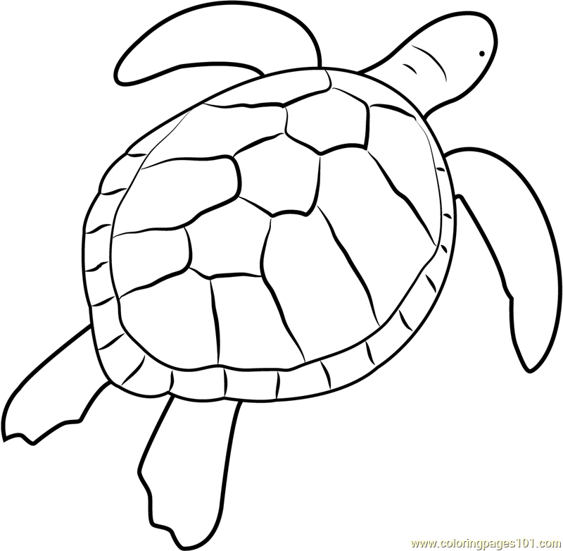 Green Sea Turtle Coloring Page