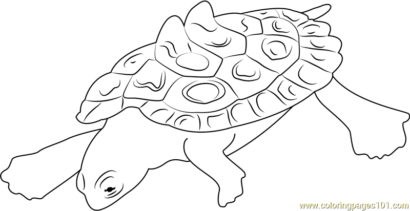 Joe Mcdonald Southern Black Turtle Coloring Page