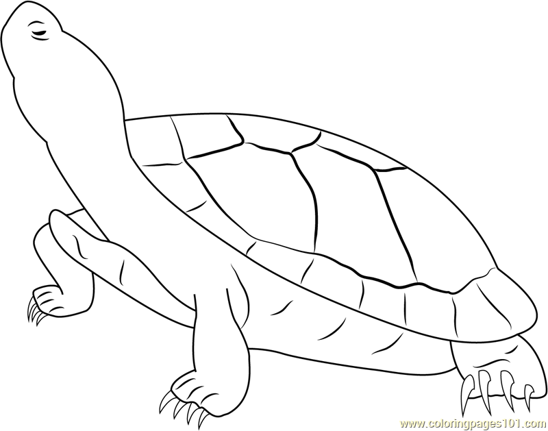 Jumbo Red Ear Slider Turtle Coloring Page