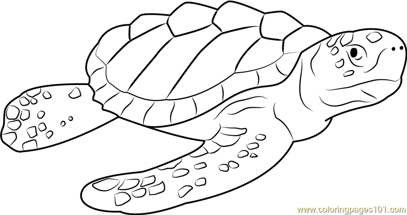 Logger Head Sea Turtle Coloring Page