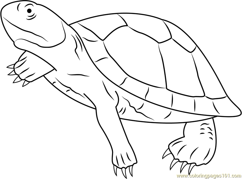 Mary River Turtle Coloring Page