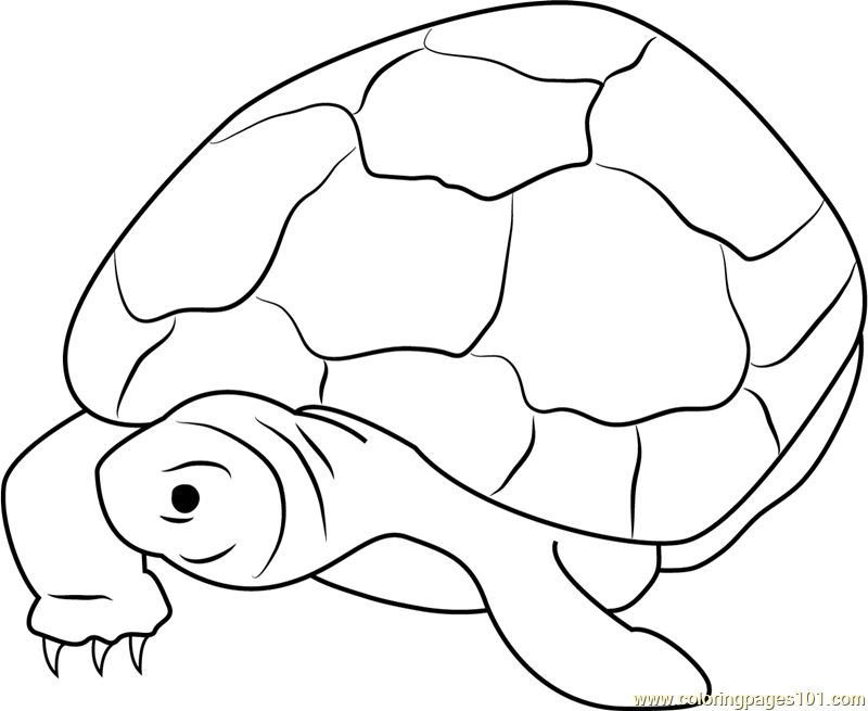 Nervous Turtle Coloring Page