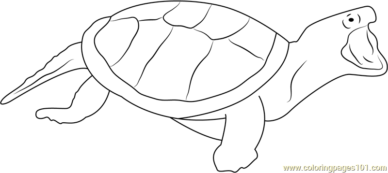 Turtle Attacking Coloring Page