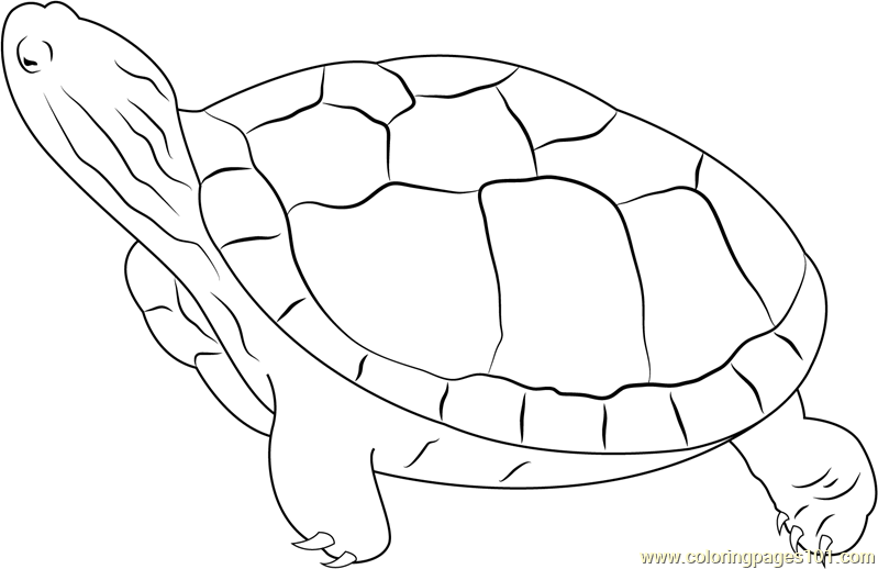 Turtle Looking Up Coloring Page