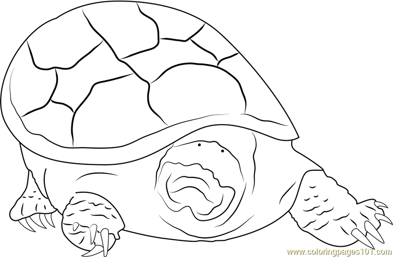 Turtle Mouth Coloring Page Free