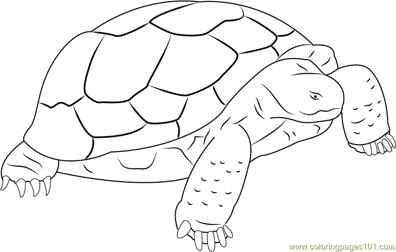 Turtle Standding on Rock Coloring Page
