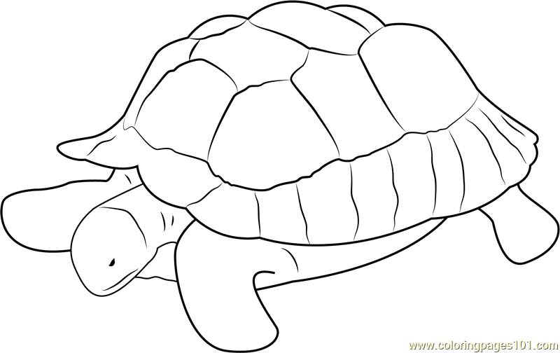 Turtle at Zoo Coloring Page