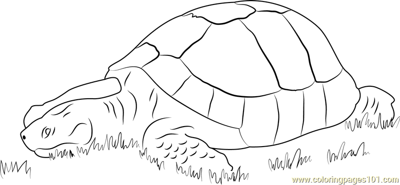 Turtle in Grass Coloring Page