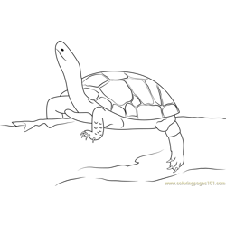 Black Turtle Rhinoclemmys Free Coloring Page for Kids