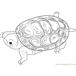 Centrata Carapace Free Coloring Page for Kids
