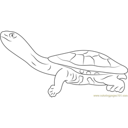 Eastern Long Neck Turtle Free Coloring Page for Kids