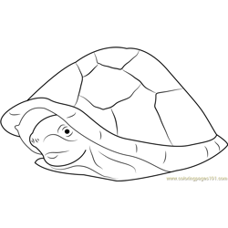 Razor Backed Musk Turtle Free Coloring Page for Kids