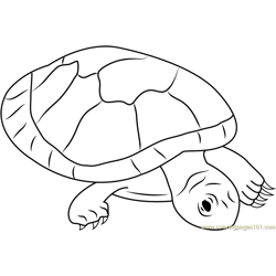 Red Headed Amazon River Turtle Free Coloring Page for Kids