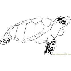 Sea Turtle Free Coloring Page for Kids