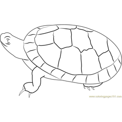 Southern Painted Turtle Free Coloring Page for Kids
