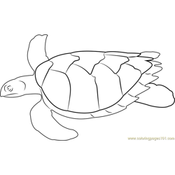 Swimming Turtle Free Coloring Page for Kids
