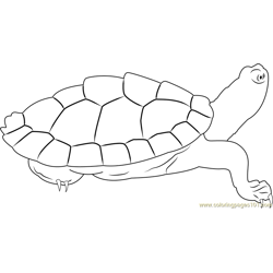 Turtle Look Free Coloring Page for Kids
