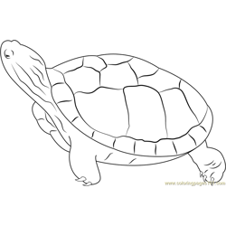 Turtle Looking Up Free Coloring Page for Kids