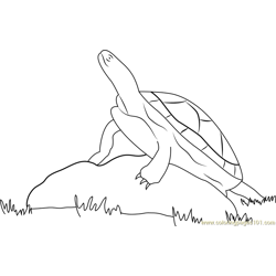 Turtle On Rock Free Coloring Page for Kids