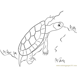 Turtle Up Free Coloring Page for Kids