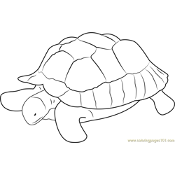 Turtle at Zoo Free Coloring Page for Kids
