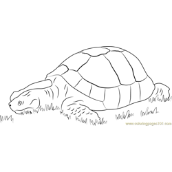 Turtle in Grass Free Coloring Page for Kids