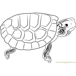 Turtle Free Coloring Page for Kids