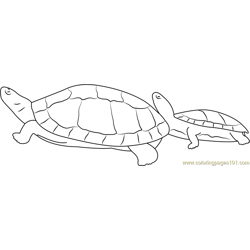 Turtles Going to Water Free Coloring Page for Kids