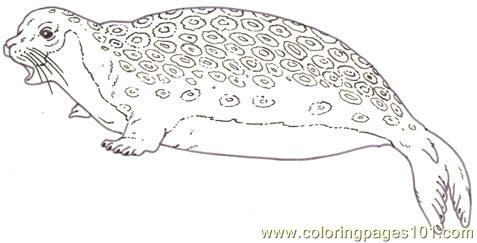 Mural Tsb Ringed Seal Coloring Page Free Seal Coloring Pages