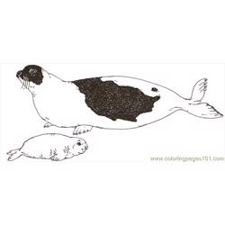 Mural Tsb Harp Seal And Pup coloring page