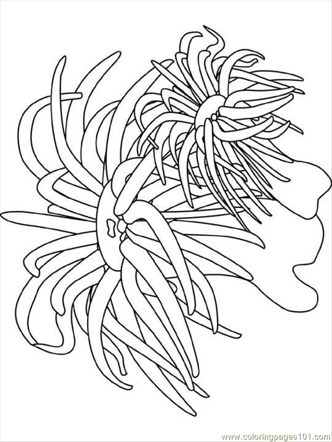Sea Anemone Coloring Page Free Seas And Oceans Coloring