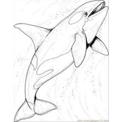 The Ocean Coloring Page coloring page