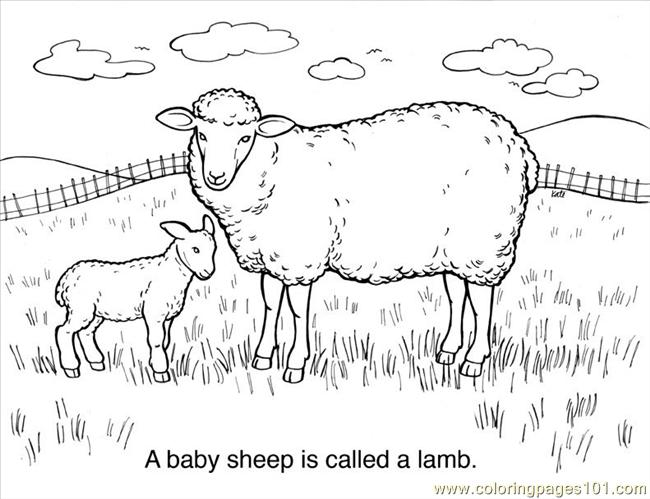30 sheep coloring page coloring page