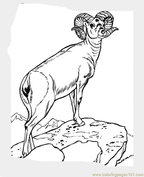 Sheep Coloring Page
