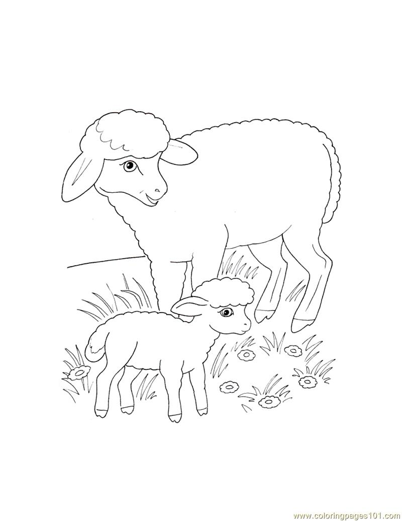 Mother Sheep To Color - Worksheet & Coloring Pages