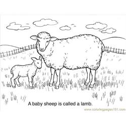 30 Sheep Coloring Page