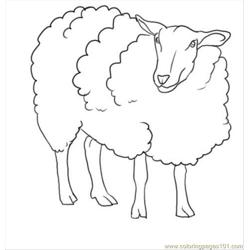 How To Draw A Sheep Step 7