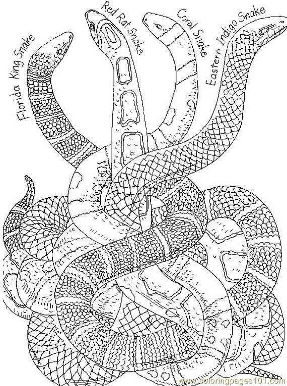 Differents shapes snake Coloring Page Free Snake Coloring Pages
