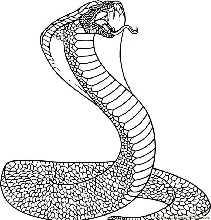 how to draw a realistic cobra snake